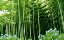 Chọn cây trồng hỗ trợ sinh khí