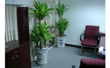 Chọn loại cây gì để đặt trong phòng hợp với phong thuỷ?