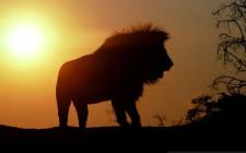 Cung sư tử và tình bạn