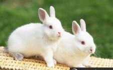 Giải mã giấc mơ thấy con thỏ