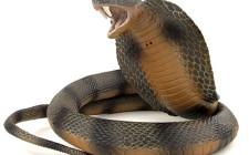 Mơ thấy bị rắn cắn: Bị xâm phạm giới tính hoặc chịu sự tổn hại khác