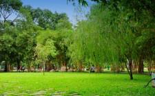 Mơ thấy bãi cỏ: Hạnh phúc gia đình và cá nhân