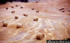 Mơ thấy cỏ khô: Cảm giác cô quạnh trong lòng