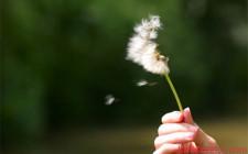 Mơ thấy gió: Tâm trạng rối ren