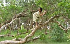 Mơ thấy leo cây : Tượng trưng cho phát triển và tài vận