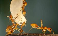 Mơ thấy mình quan sát đàn kiến: Sự thay đổi trong kinh doanh sẽ có lợi cho bạn