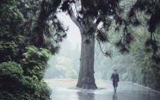 Mơ thấy mưa dông: Cuộc sống có thể sẽ thay đổi bất ngờ