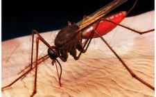 Mơ thấy muỗi: Tai họa liên tiếp xảy đến