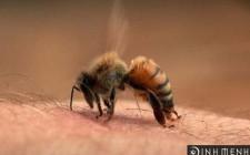 Mơ thấy ong chích