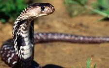 Mơ thấy rắn: Tâm trạng tiêu cực có liên quan đến vấn đề giới tính