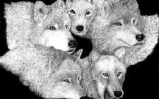 Mơ thấy sói: Lo sợ thú tính, bị tấn công hay phá hoại