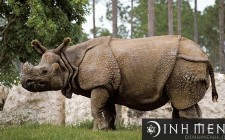 Mơ thấy tê giác: Cần chăm chỉ thực hiện nghĩa vụ của mình