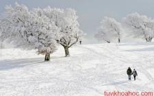 Mơ thấy tuyết: Hóa giải buồn lo trong cuộc sống