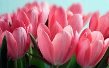 Trồng hoa phải chú ý đến một số loài hoa có độc