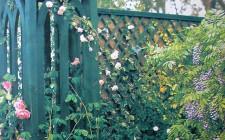 Tường rào bao quanh vườn