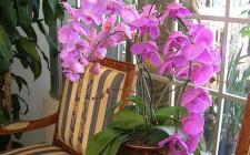 Ý nghĩa của hoa lan trong phong thủy