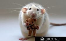 Giải mã các bí ẩn giấc mơ thấy con chuột