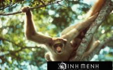 Giải mã các bí ẩn giấc mơ thấy con khỉ