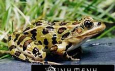 Giải mã các bí ẩn giấc mơ thấy hình ảnh con ếch