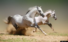 Giải mã các bí ẩn giấc mơ thấy ngựa