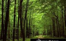Giải mã các bí ẩn giấc mơ thấy rừng cây cối
