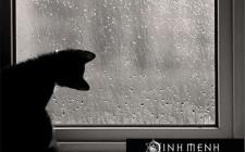 Giải mã các bí ẩn giấc mơ thấy trời mưa