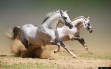 Giải mộng giấc mơ nhìn thấy ngựa