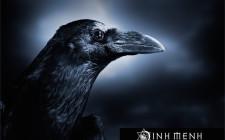 Giải mộng giấc mơ nhìn thấy quạ đen