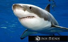 Khám phá ý nghĩa giấc mơ thấy Cá Mập - ngủ nằm mơ thấy con Cá Mập