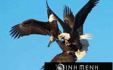 Khám phá ý nghĩa giấc mơ thấy Đại bàng - ngủ nằm mơ thấy chim Đại bàng