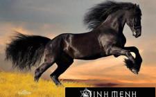 Khám phá ý nghĩa giấc mơ thấy Ngựa - ngủ nằm mơ thấy con Ngựa
