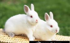 Khám phá ý nghĩa giấc mơ thấy Thỏ - ngủ nằm mơ thấy con Thỏ