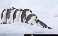Khám phá ý nghĩa giấc mơ thấy chim Cánh cụt - ngủ nằm mơ thấy con Cánh cụt