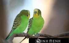 Khám phá ý nghĩa giấc mơ thấy chim Yến phụng - ngủ nằm mơ thấy Yến phụng