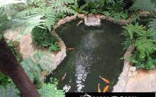 Khám phá ý nghĩa giấc mơ thấy hồ cá - nằm ngủ mơ thấy bể cá