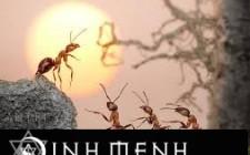 Khám phá ý nghĩa giấc mơ thấy kiến - nằm ngủ mơ thấy tổ kiến
