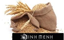 Khám phá ý nghĩa giấc mơ thấy lúa mì - nằm ngủ mơ thấy mình ăn lúa mạch