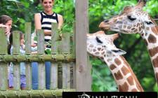 Khám phá ý nghĩa giấc mơ thấy sở thú - ngủ nằm mơ đi sở thú
