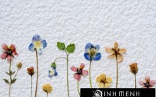 Những kiêng kỵ cần tránh khi bố trí hoa khô trong nhà