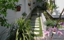 Phong thủy trồng cây xanh trong sân vườn