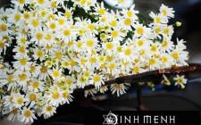 Ý nghĩa 6 loài hoa trong khoa học phong thủy
