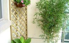 Bài trí cây xanh đem lại vượng khí cho ngôi nhà