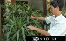 Chọn cây xanh phù hợp trồng trong phòng khách