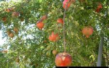 Những loại cây mang lại may mắn và sức khỏe cho gia đình