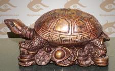 Bài trí của Rùa