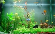Cá phong thủy – động thực vật có ảnh hưởng như thế nào đến phong thủy?