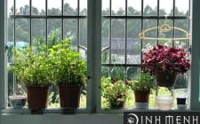 Chú ý để trồng hoa ở ban công đúng phong thủy
