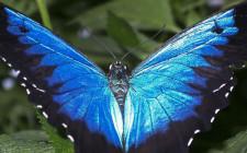 Mơ thấy bướm: Tượng trưng đời sống tình thần của con người