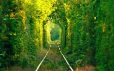 Mơ thấy cây cối: Tượng trưng tính cách và cá tính của một con người