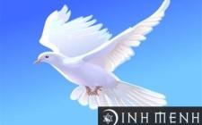 Mơ thấy chim bồ câu: Gia đình hòa thuận, cuộc sống ổn định